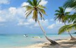 Palm Tree. Suzanne Beale. Credit control, bookkeeping and payroll administration
